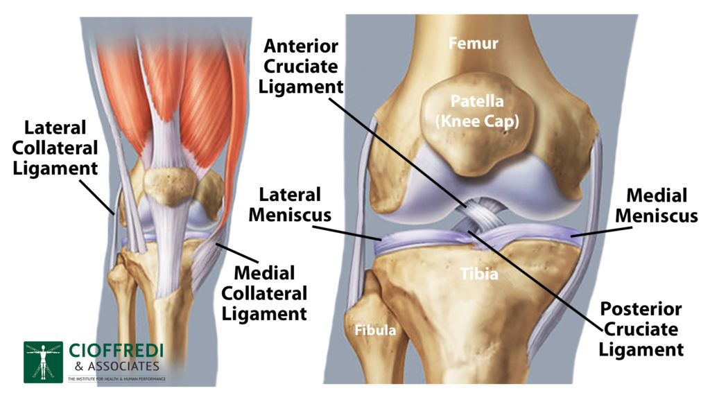 Diagram of the Knee by Cioffredi PT