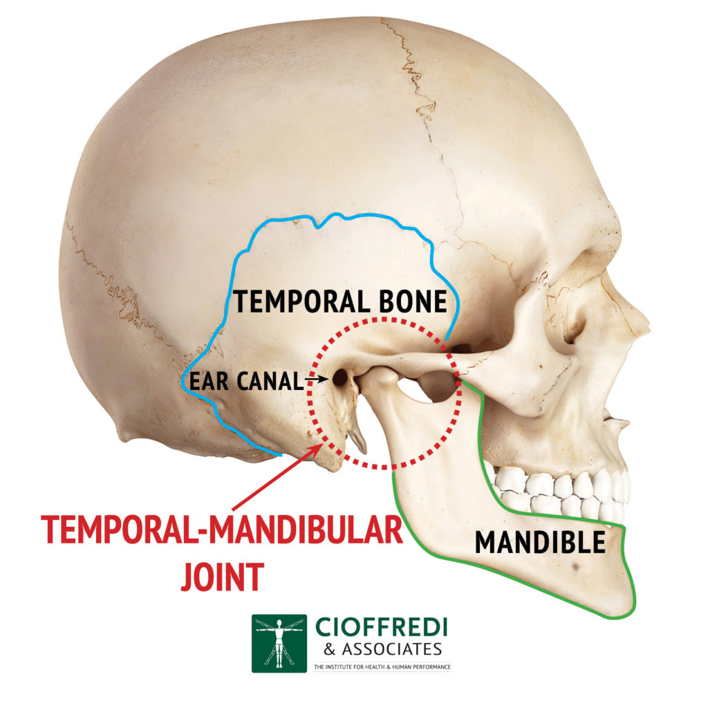 TMJ Anatomy Illustration